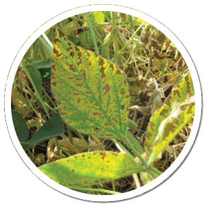 heads up plant protectant