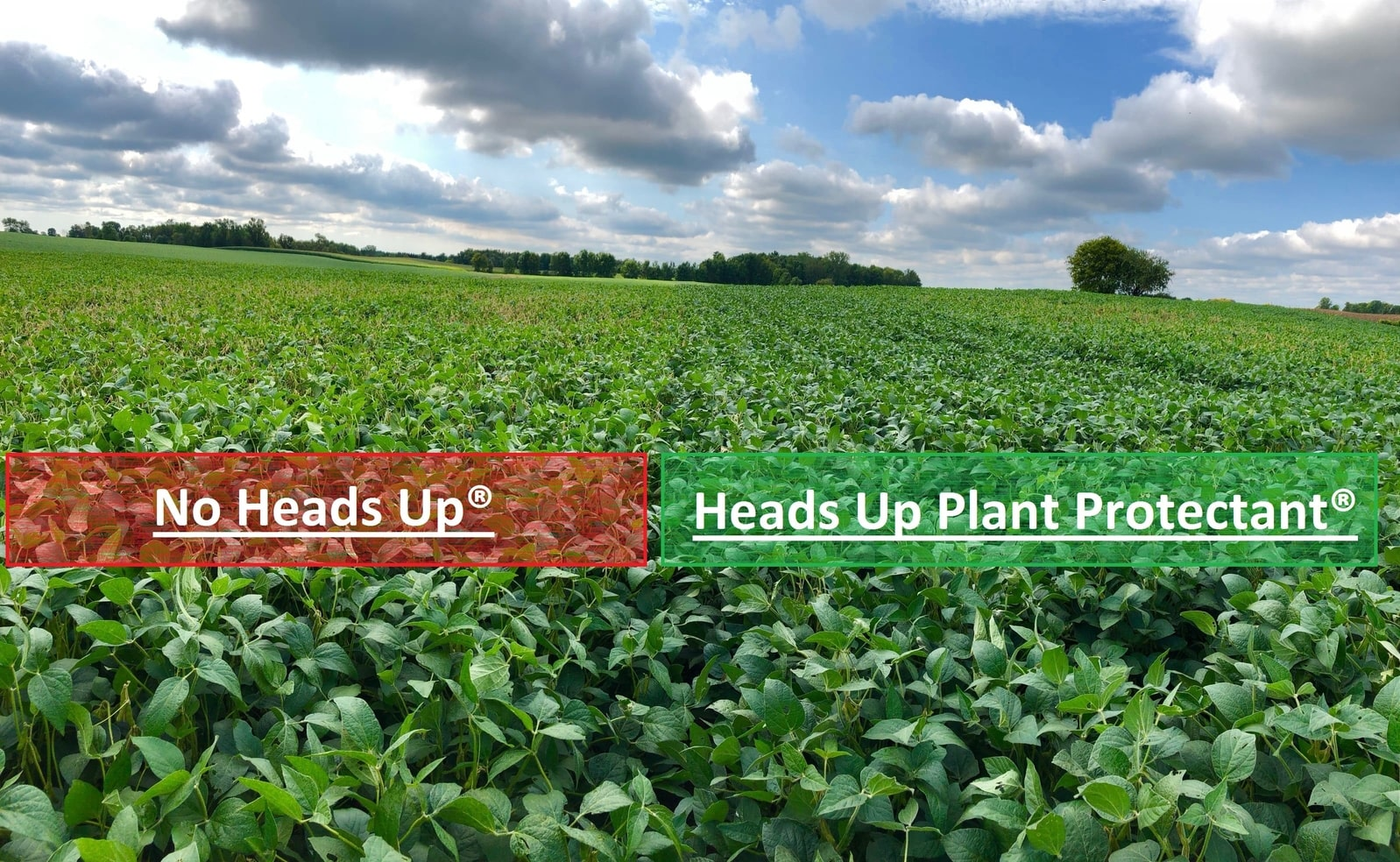 White Mold Base vs Heads Up